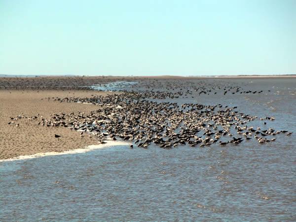 Resultado de imagen para Área Natural Protegida Bahía de San Antonio