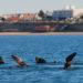 Las Grutas y playas de San Antonio y del Puerto, refugio de muchos animales marinos